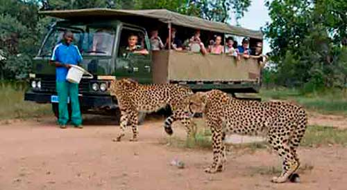shingwedzi wildlife tour